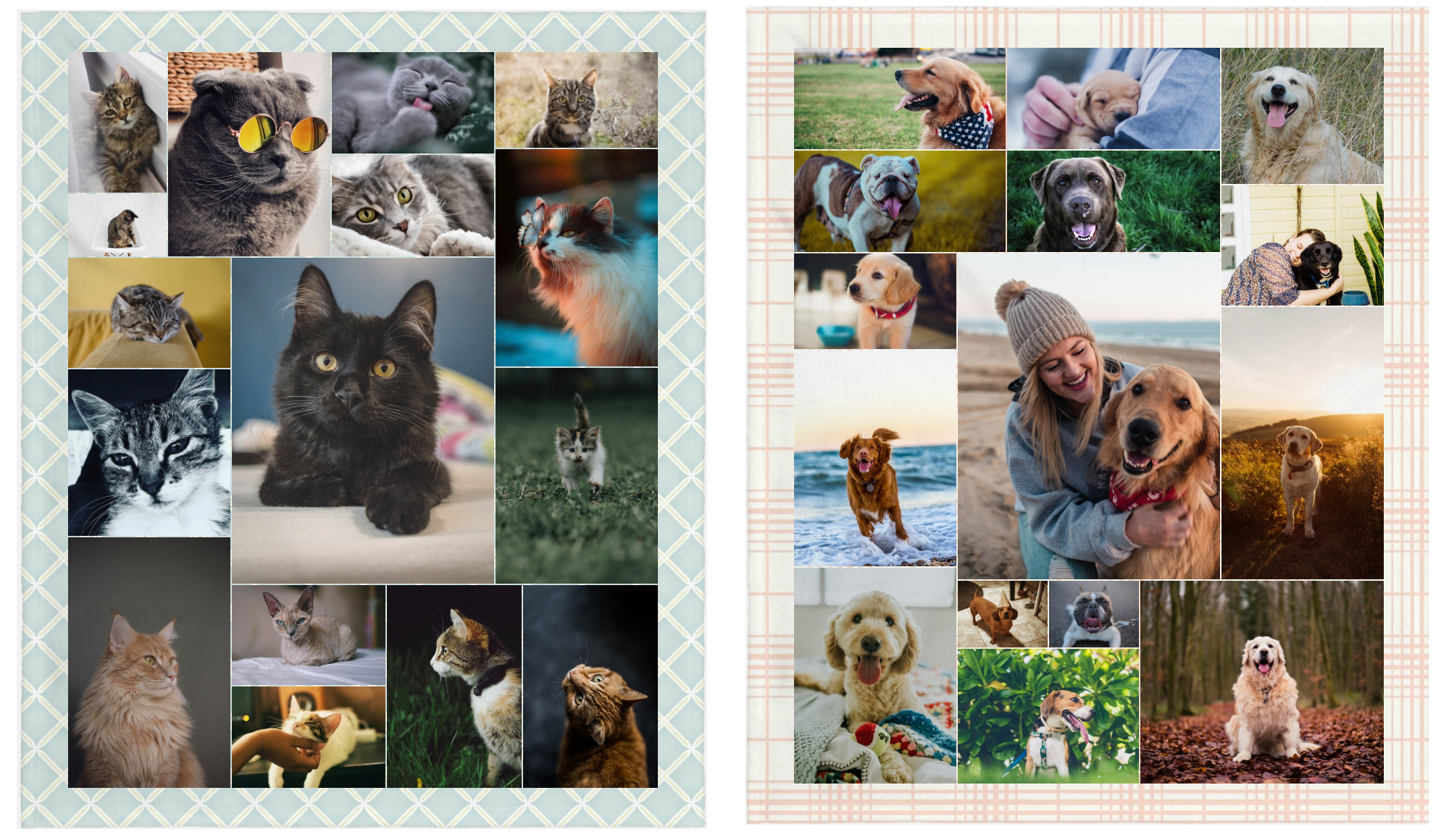 Collage of cat and dog photos