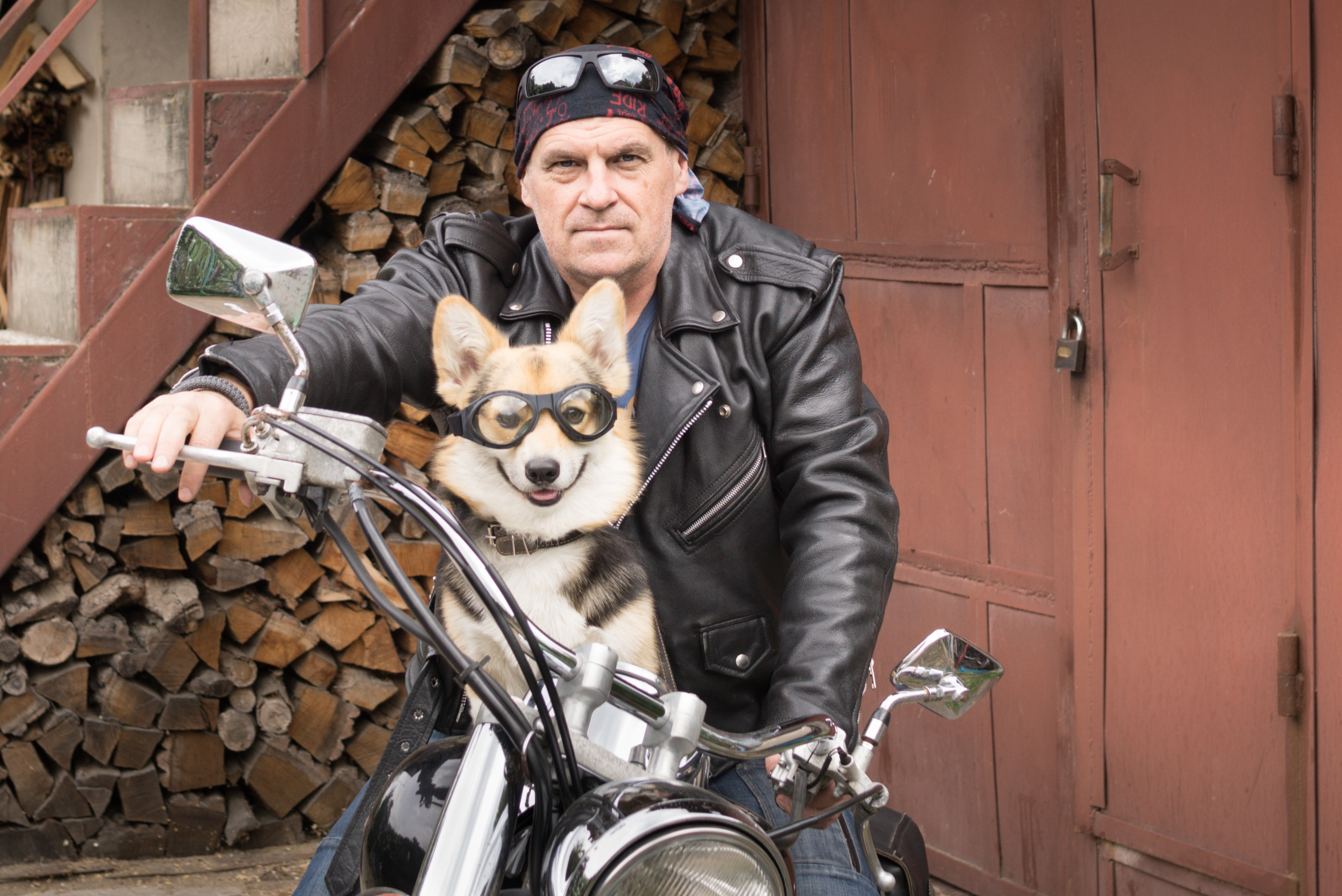 Photo of humor. The biker and his dog are sitting on a motorcycle. | Gifts for Him